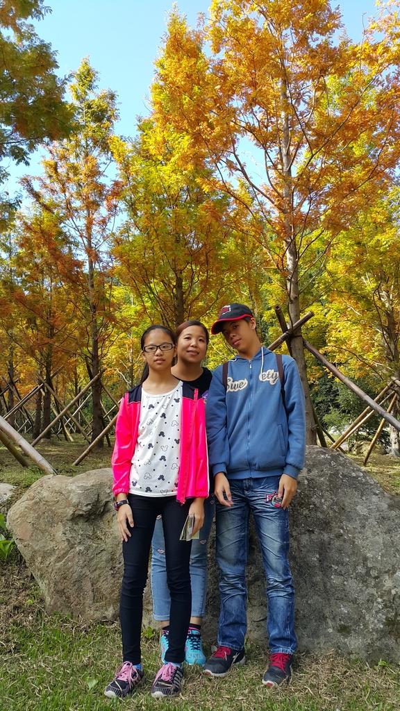 賞楓的另一個選擇;杉林溪 賞水杉:20161119_112617.jpg