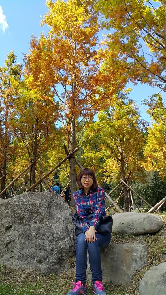 賞楓的另一個選擇;杉林溪 賞水杉:20161119_112634.jpg