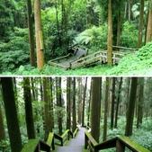 杉中 綠步道:相簿封面