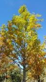 賞楓的另一個選擇;杉林溪 賞水杉:20161119_112337.jpg