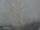970127日本志賀滑雪五日(morries):SANY0111.JPG