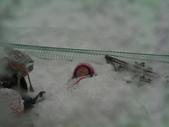 20120125日本苗場滑雪五日:SANY5930.JPG