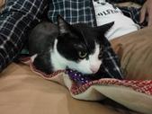 貓咪:1447465160.jpg
