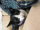 貓咪:1447465161.jpg