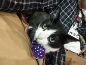 貓咪:1447465162.jpg
