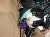 貓咪:1447465163.jpg