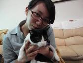 貓咪:1447465165.jpg