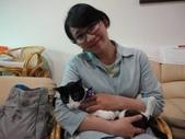 貓咪:1447465166.jpg