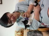 貓咪:1447465167.jpg