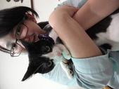 貓咪:1447465168.jpg