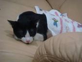 貓咪:1447465169.jpg