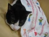 貓咪:1447465170.jpg