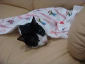 貓咪:1447465171.jpg