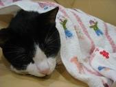 貓咪:1447465172.jpg