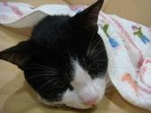 貓咪:1447465173.jpg