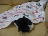貓咪:1447465174.jpg