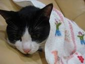 貓咪:1447465175.jpg