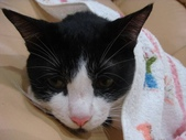 貓咪:1447465176.jpg