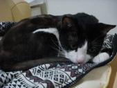 貓咪:1447465177.jpg