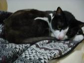 貓咪:1447465178.jpg