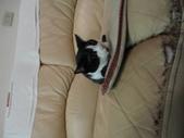 貓咪:1447465158.jpg