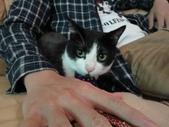 貓咪:1447465159.jpg