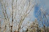 09年又白又凍的太平山:DSC_0133.JPG