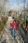09年又白又凍的太平山:DSC_0136.JPG
