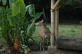 09我在巴里島天氣晴:DSC_0636.JPG
