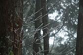 09年又白又凍的太平山:DSC_0065.JPG