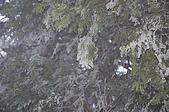 09年又白又凍的太平山:DSC_0067.JPG
