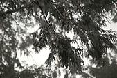 09年又白又凍的太平山:DSC_0069.JPG