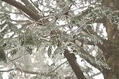 09年又白又凍的太平山:DSC_0072.JPG