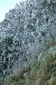 09年又白又凍的太平山:DSC_0083.JPG