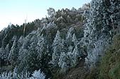 09年又白又凍的太平山:DSC_0085.JPG