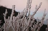 09年又白又凍的太平山:DSC_0103.JPG
