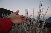 09年又白又凍的太平山:DSC_0105.JPG
