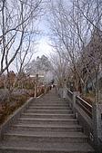 09年又白又凍的太平山:DSC_0120.JPG