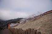09年又白又凍的太平山:DSC_0121.JPG