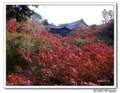 東福寺通天橋紅葉:2011_1125_092728.JPG