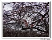 化解歷史恩怨的彥根城櫻花:2011_1123_120340.JPG