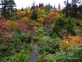 弥陀ヶ原立山カルデラ展望台:2012_1011_092132.JPG