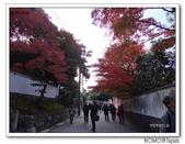 東福寺通天橋紅葉:2011_1125_092429.JPG