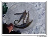 網走湖冰上穴釣:2014_0226_094326.JPG