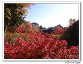 東福寺通天橋紅葉:2011_1125_092930.JPG