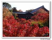 東福寺通天橋紅葉:2011_1125_092942.JPG