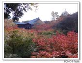 東福寺通天橋紅葉:2011_1125_092702.JPG