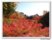 東福寺通天橋紅葉:2011_1125_092917.JPG