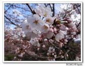 2012年關西追逐櫻花之旅-京都:2012_0407_081430.JPG