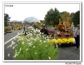 鳥取花回廊:2010_1109_132538.JPG